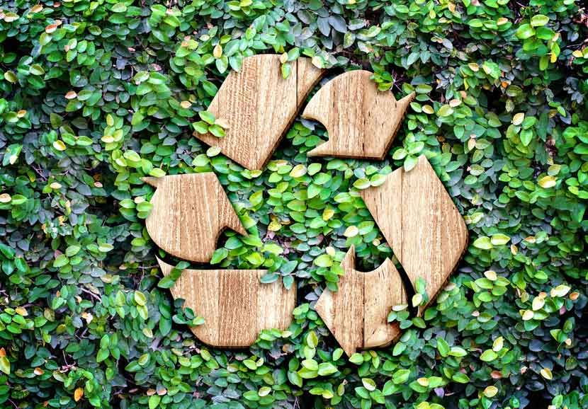 Eco-Conscious Campuses: How Colleges and Universities Can Embrace Sustainability